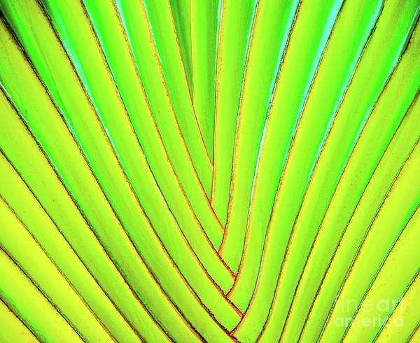 Photograph - Palms And Fronds - Hawaii by D Davila