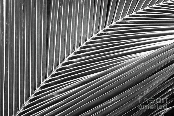 Wall Art - Photograph - Palm Leaf Abstract by Delphimages Photo Creations