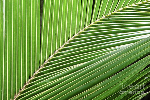 Wall Art - Photograph - Palm Leaf by Delphimages Photo Creations