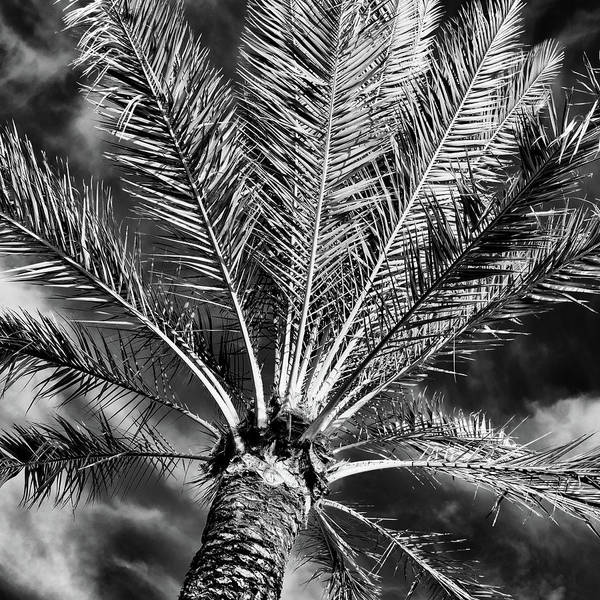 Wall Art - Photograph - Palm Life #2 by Stephen Stookey