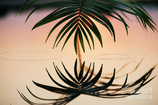 Photograph - Palm Light Reflection by Tim Gainey