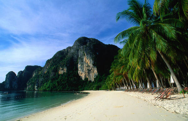 Phi Photograph - Palm Lined Beach And Limestone Cliffs by Anders Blomqvist