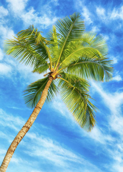 Wall Art - Photograph - Palm Paradise - #1 by Stephen Stookey