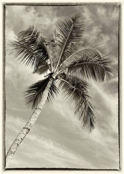 Wall Art - Photograph - Palm Paradise - #2 by Stephen Stookey