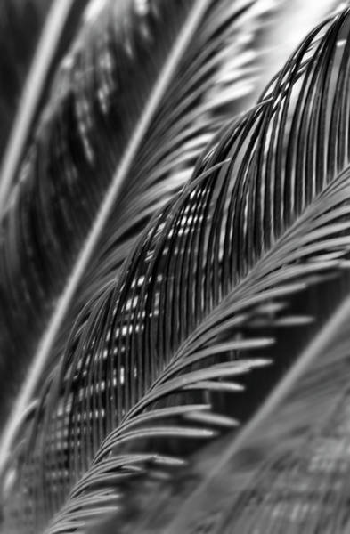 Photograph - Palm by Silvia Marcoschamer