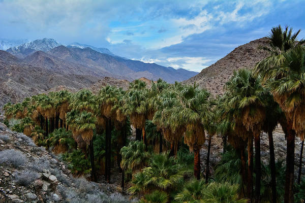 Photograph - Palm Springs Palm Canyon by Kyle Hanson