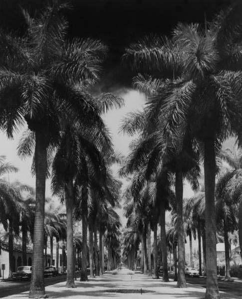Palm Tree Photograph - Palm Street by Fox Photos