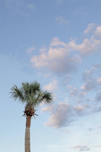 Sparse Photograph - Palm Tree Against Blue Sky by Tricia Shay Photography