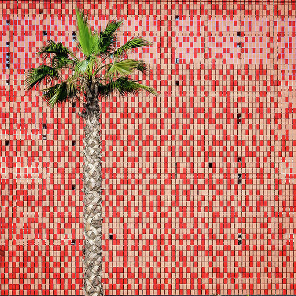 Wall Art - Photograph - Palm Tree And Tiled Wall by Alexey Stiop