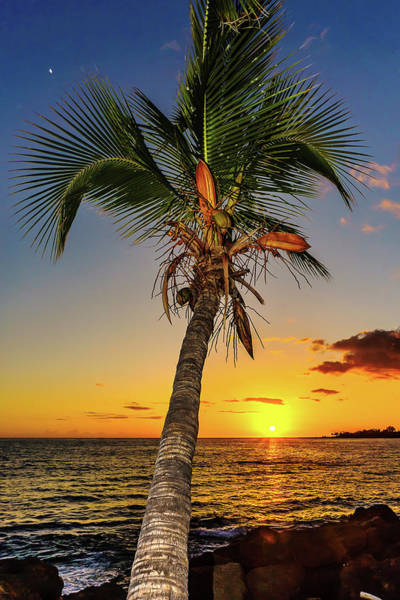 Photograph - Palm Tree At Sunset by John Bauer
