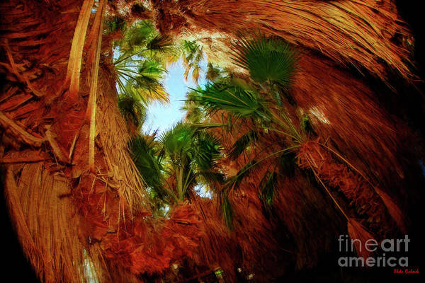 Photograph - Palm Tree Cave Coachella Valley Preserve by Blake Richards