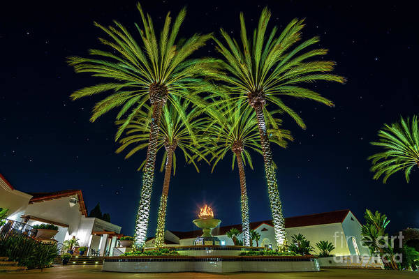 Photograph - Palm Tree Fireworks by David Levin