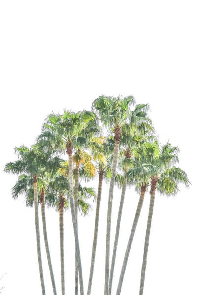 Digital Art - Palm Tree Grove by Ramona Murdock
