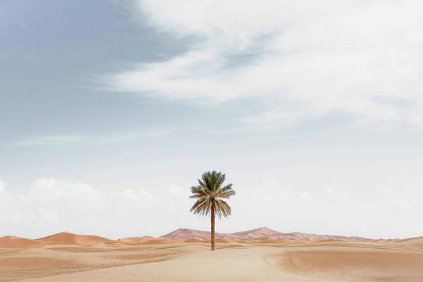 Scenery Photograph - Palm Tree In Desert Landscape by Roine Magnusson