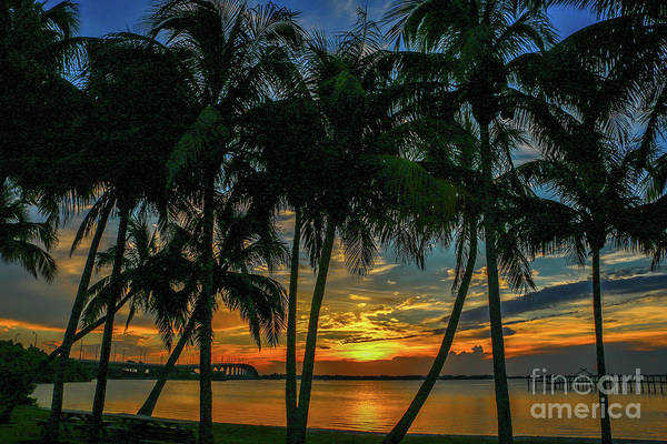 Art Print featuring the photograph Palm Tree Lagoon Sunrise by Tom Claud