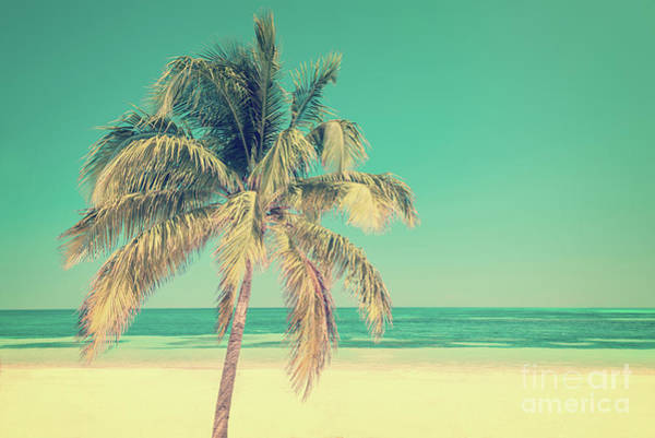 Wall Art - Photograph - Palm Tree On A Beach by Delphimages Photo Creations