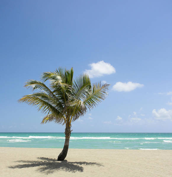 Wall Art - Photograph - Palm Tree On Idyllic Beach by Julnichols