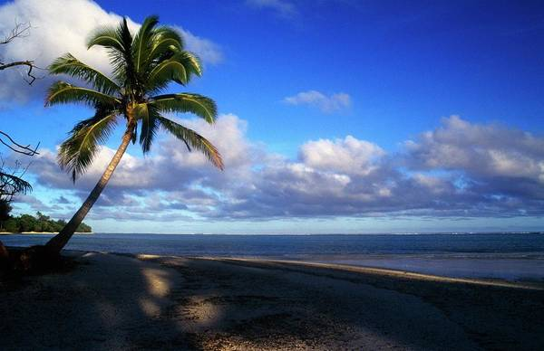 Rarotonga Photograph - Palm Tree On Rarotonga Beach by Design Pics