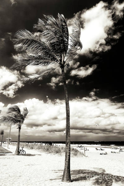 Photograph - Palm Tree Shadows At Fort Lauderdale Beach by John Rizzuto