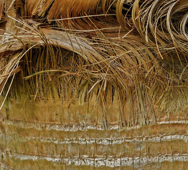 Photograph - Palm Tree Straw 2 by Silvia Marcoschamer