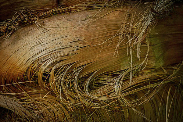 Photograph - Palm Tree Straw by Silvia Marcoschamer