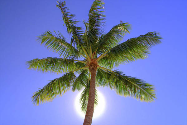 Photograph - Palm Tree Sun by Patti Deters