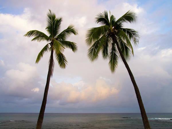 Photograph - Palm Tree Sunrise by Christopher Johnson
