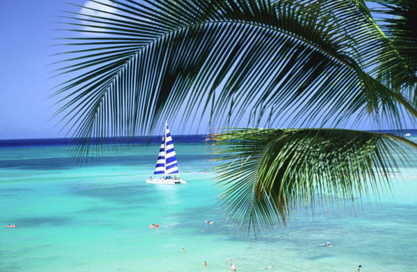 Hawaii Wall Art - Photograph - Palm Tree, Swimmers And A Boat At The by Ann Cecil