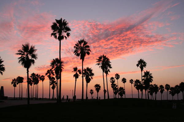 Small Town Usa Photograph - Palm Trees 2 by Revive