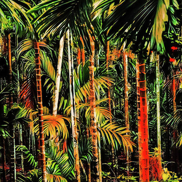 Photograph - Palm Trees by AE collections