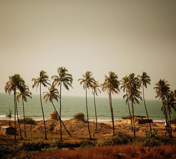 Goa Photograph - Palm Trees Along The Beach In Goa At by Michael Marquand