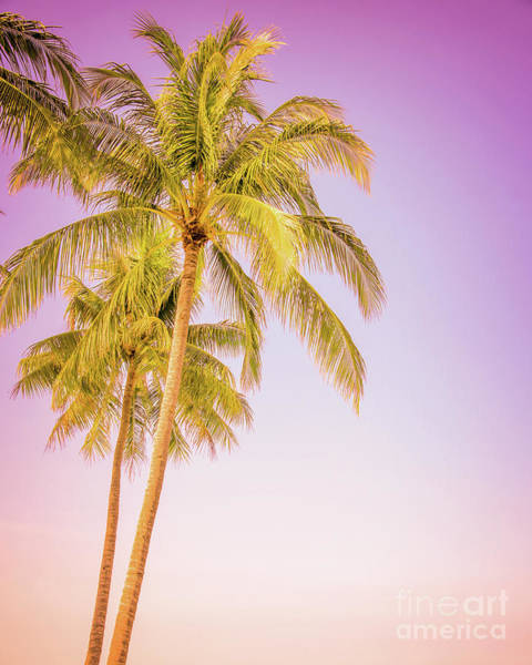 Wall Art - Photograph - Palm Trees And Pink Sky by Delphimages Photo Creations