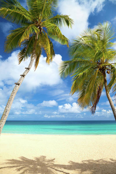 British Virgin Islands Photograph - Palm Trees At A Tropical Beach In The by Cdwheatley