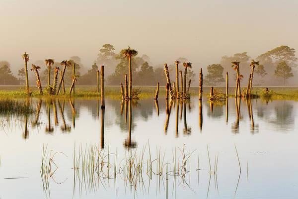 Wall Art - Photograph - Palm Trees At Sunrise, Viera Wetlands by Adam Jones