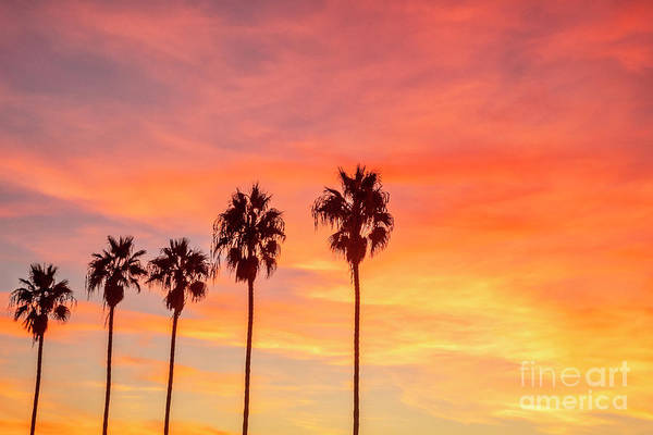 Wall Art - Photograph - Palm Trees At Sunset In La Jolla, California by Julia Hiebaum