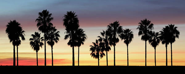 California Mission Photograph - Palm Trees At Sunset by S. Greg Panosian
