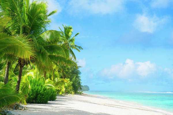 Rarotonga Photograph - Palm Trees Growing On Tropical Beach by Jacobs Stock Photography Ltd