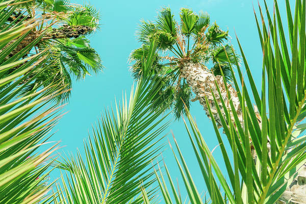 Photograph - Palm Trees I by Anne Leven
