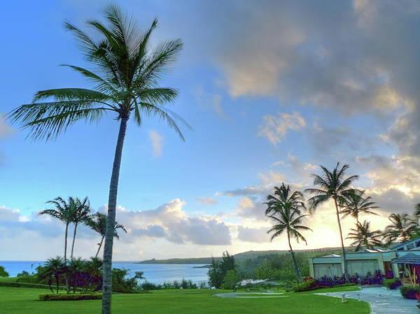 Kapalua Photograph - Palm Trees In Paradise by Mathew Spolin