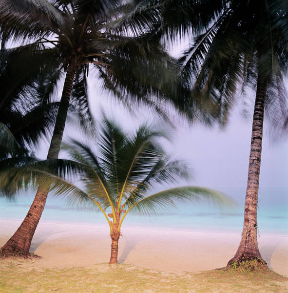 Photograph - Palm Trees On Beach by Martin Puddy
