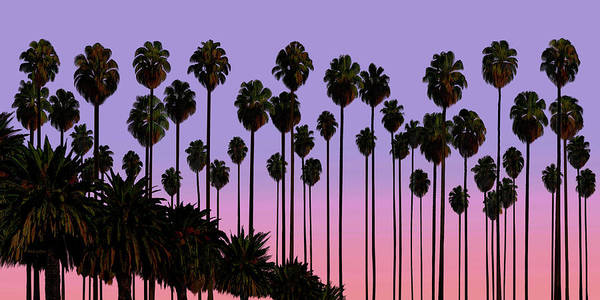Painting - Palm Trees, Palm Haven, San Jose, California by David Arrigoni