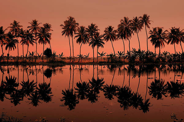 Kerala Photograph - Palm Trees Reflection by © Arvind Balaraman