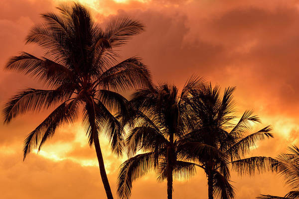 Wall Art - Photograph - Palm Trees Silhouetted In An Orange Sky by Jenna Szerlag
