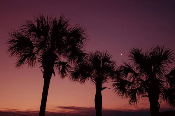 Wall Art - Photograph - Palm Trees Sunset by Stephanie McDowell
