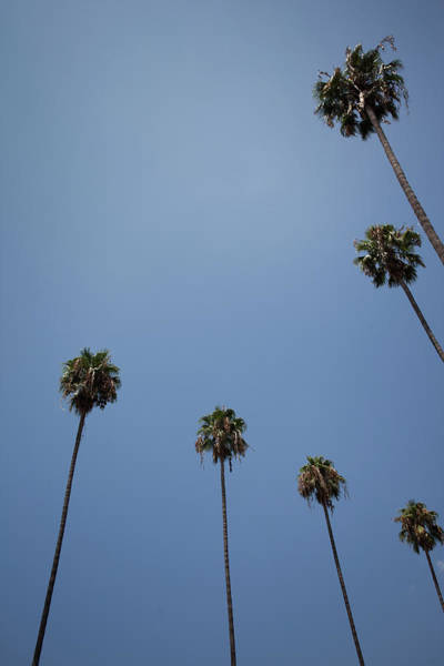 Photograph - Palm Trees by Tuan Tran