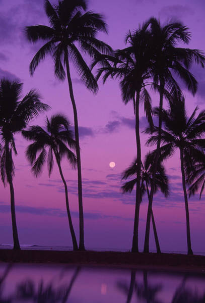 Photograph - Palm Trees With Moon In A Bright Pink by Design Pics/ron Dahlquist