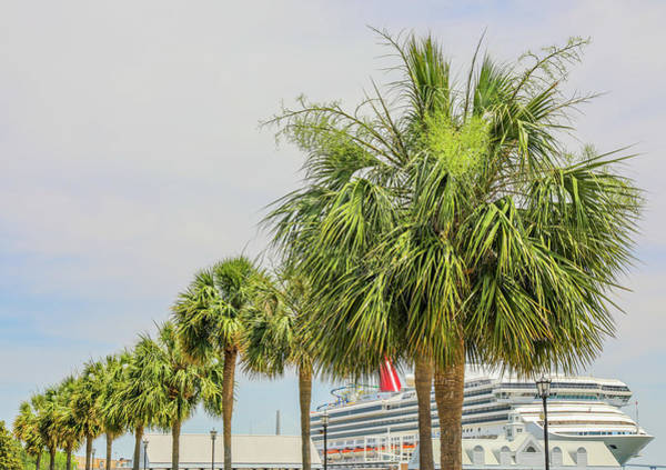 Photograph - Palmetto Trees And Cruise Ship by Dan Sproul