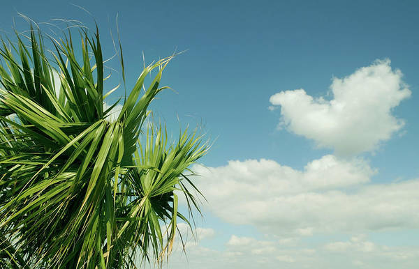 Palm Beach Photograph - Palms And Clouds by Sstop