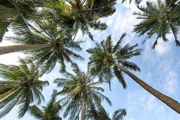 Photograph - Palms  Beach by Top Wallpapers