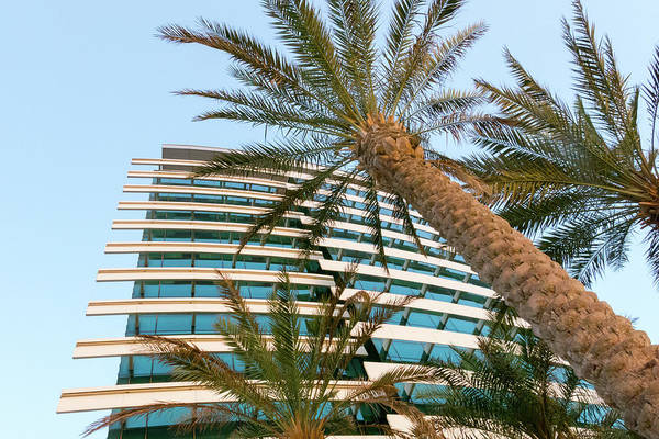 Photograph - Palms Of Dubai by SR Green